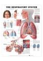 Medical and Anatomical Charts 12